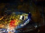 DJD Fish 2011 10 68