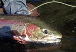 DJD Fish 2011 10 88